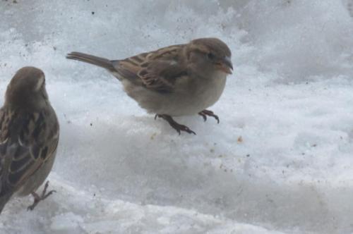 Donner des miettes de pain aux oiseaux